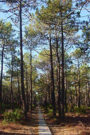 Flora del Parque del Penyagolosa