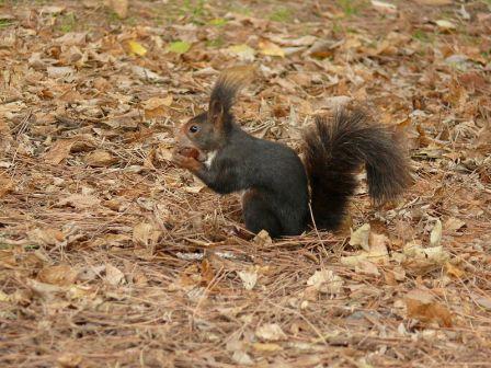 Fauna parques naturales Castellon