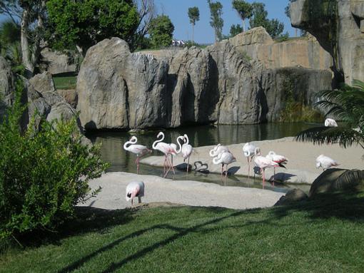 Animales de el Bioparc