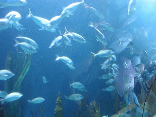 Actividades de el oceanografico de VALENCIA