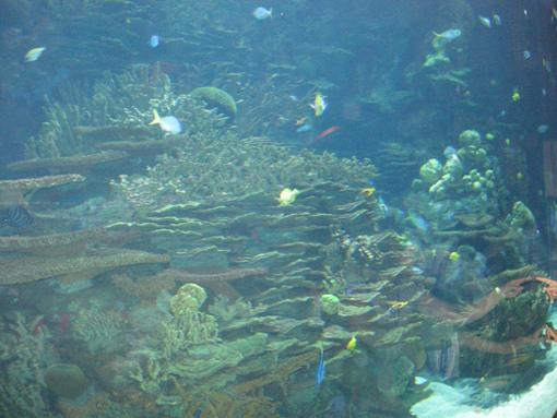 Restaurant submarino de el Oceanográfico