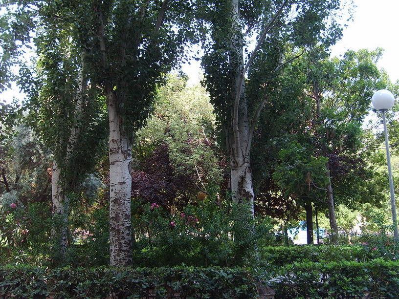 Vegetacion de la palza del cedro en Valencia