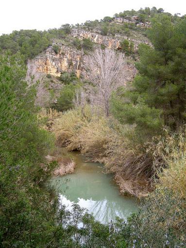 Vegetacion de Pedralba