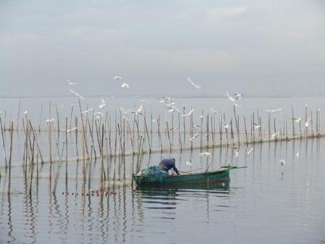 pescador del palmar