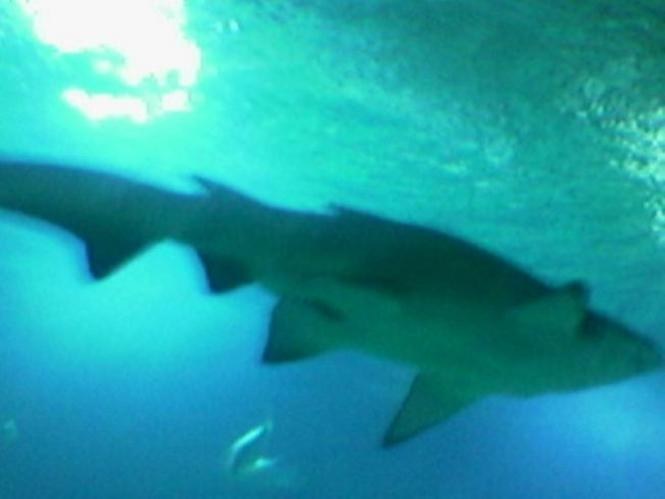 Oceanos, los Tiburones, Valencia