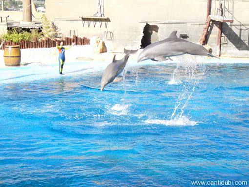 Adaptación de los cetáceos al entorno en Mundomar, Benidorm