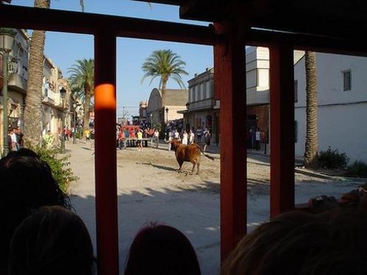 Albuixech, toros en la plaza
