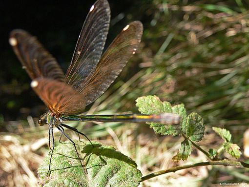 Naturaleza en Banyeres de Mariola