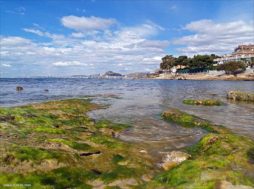 Algas sobre las piedras en Cabo de las Huertas
