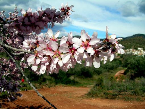Paisajes naturales de Azuebar