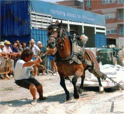 Fiesta de Tira y Arrastre en Benicarlo