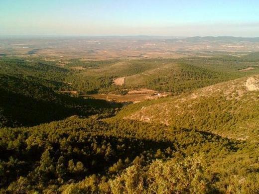 Vista de la Plana d'Utiel des del Marisancho