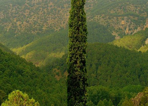 Vistas de la Sierra de El Toro