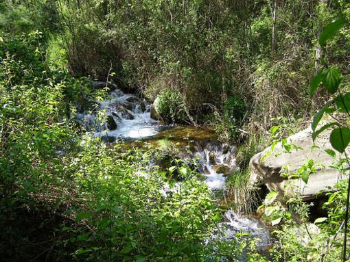Pataje cercano al nacimiento de el Rio Palancia