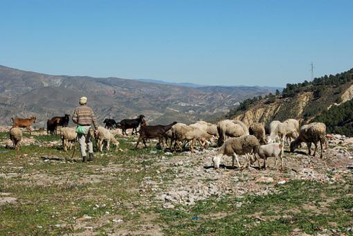 Vegetación y ganadería en Alcora