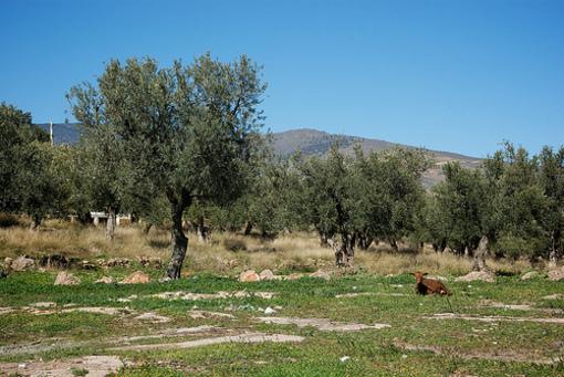 Cultivos y terrenos de Alcalatel