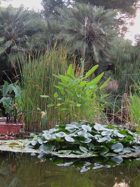 Estanque en Jardín botánico de Valencia.