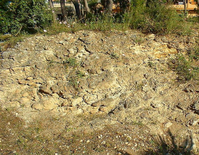 Restos de Roca calcaria al municipio de Burjassot