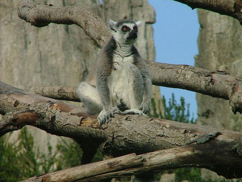 Animales de el Zoo de Valencia