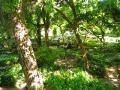 Vegetació frondosa del jardí Montfort