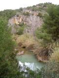 Vegetació de Pedralba