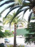 Vista de la plaza de Alfara del Patriarca