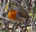 Aves del Parque Natural del Carrascal de Font Roja