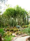 Vegetación del Huerto del Cura en El Elche