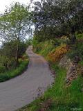 Camí asfaltat per les sendes de Pedreguer