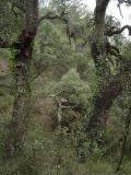 Bosques y parques de Alto Palancia