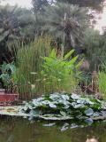 Estany en Jardí botànic de València.