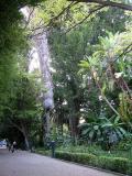 Paseos por el Jardín Botánico de Valencia