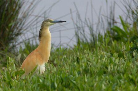 Naturaleza y aves de la Albufera